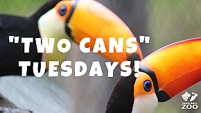"'Two Cans"" Tuesdays"